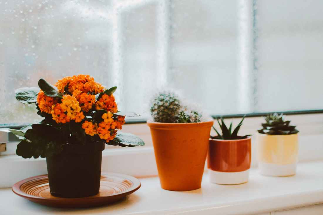 photo of indoor plants